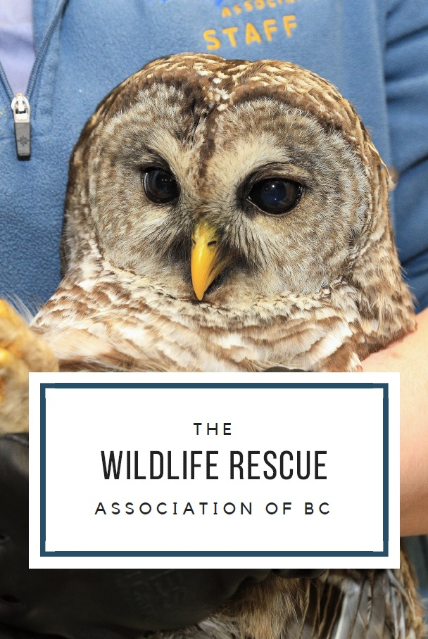 Wildlife Rescue Press Package